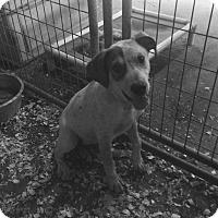 Adopt A Pet :: Skippy - Hohenwald, TN