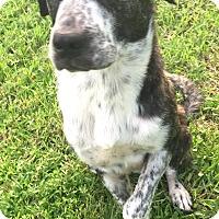 Adopt A Pet :: Romeo - St Petersburg, FL