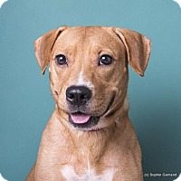 Adopt A Pet :: Audrey - Anniston, AL