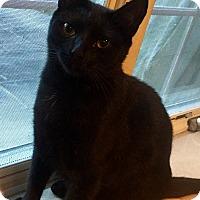 Adopt A Pet :: Penny - Harrison, NY