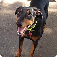 Adopt A Pet :: Kiwi - New Richmond, OH