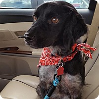 Adopt A Pet :: OH/Chester - Kent, OH