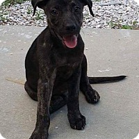 Adopt A Pet :: Chance - Tampa, FL