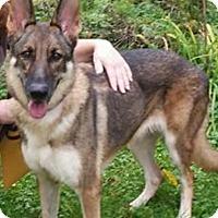 Adopt A Pet :: Julia - Fort Atkinson, WI