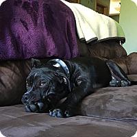 Adopt A Pet :: Tia - Adoption Pending - West Allis, WI