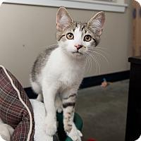 Adopt A Pet :: Cornbread - Wilmington, DE