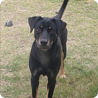 Adopt A Pet :: Jake - White Settlement, TX