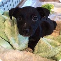 Adopt A Pet :: Dale - DeForest, WI