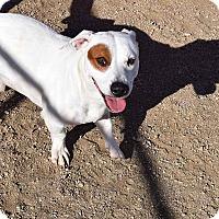 Adopt A Pet :: Bo - Sierra Vista, AZ
