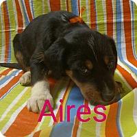 Adopt A Pet :: Aires - Garden City, MI