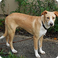 Adopt A Pet :: Scuppers - Ormond Beach, FL