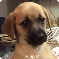 Adopt A Pet :: Echo - Hagerstown, MD