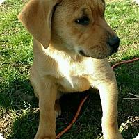 Adopt A Pet :: Earl - Allentown, PA