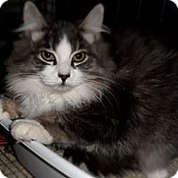 Adopt A Pet :: Pansy - Duncan, BC