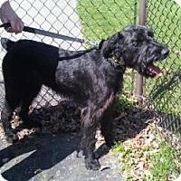Adopt A Pet :: Baxter - North Benton, OH