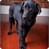 Adopt A Pet :: Rivers - Owensboro, KY