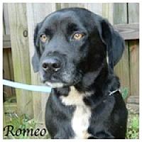 Adopt A Pet :: Romeo - Newnan, GA