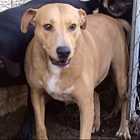 Adopt A Pet :: AA-Cuddles - Tyler, TX