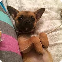 Adopt A Pet :: Teddy - Arden, NC