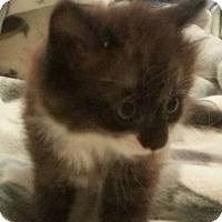 Adopt A Pet :: Mist - Hamilton, ON