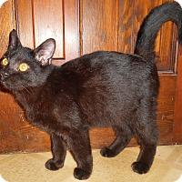 Adopt A Pet :: Donovan - Chattanooga, TN