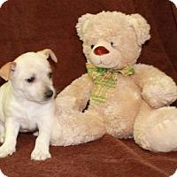 Adopt A Pet :: In The Closet - Salem, NH