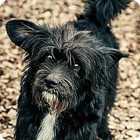Adopt A Pet :: Zippy - Potomac, MD