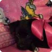 Adopt A Pet :: Joni - Sudbury, MA
