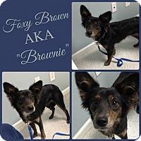 Adopt A Pet :: Brownie - Raleigh, NC