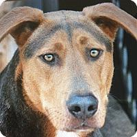 Adopt A Pet :: QUINCY JONES VON QUERN - Los Angeles, CA