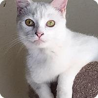 Adopt A Pet :: Lacey - McKinney, TX