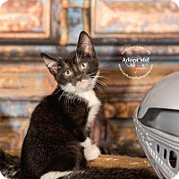 Adopt A Pet :: Rennik - Cincinnati, OH