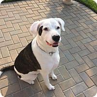 Adopt A Pet :: Dobby - Pembroke, GA