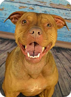 American Pit Bull Terrier Mix Dog for adoption in Anchorage, Alaska - Bella