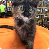 Adopt A Pet :: Clementine - McKinney, TX
