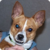 Adopt A Pet :: MT Oscar - Lafayette, LA
