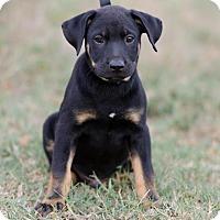 Adopt A Pet :: Jethro $250 - Seneca, SC