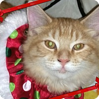 Adopt A Pet :: COSMO - Winterville, NC