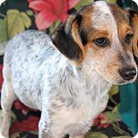 Adopt A Pet :: Dallas - Ponca City, OK