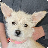 Adopt A Pet :: CANDY - Hurricane, UT