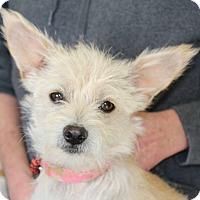 Adopt A Pet :: CANDY - Hurricane, UT