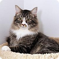 Adopt A Pet :: Wolfie - O'Fallon, MO