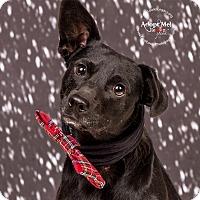 Adopt A Pet :: Lt. Dan - Cincinnati, OH