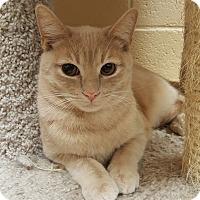 Adopt A Pet :: McGee - Smithfield, NC