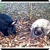 Adopt A Pet :: Eeyore & B@B@ - Williston, FL