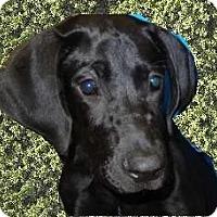 Adopt A Pet :: Grace - Antioch, IL