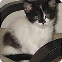 Adopt A Pet :: Moo - Davis, CA