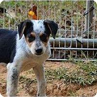 Adopt A Pet :: Nat Nat - New Boston, NH