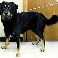 Adopt A Pet :: Jocko - Washington Court House, OH