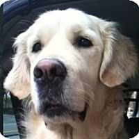 Adopt A Pet :: Logan - Cheshire, CT
